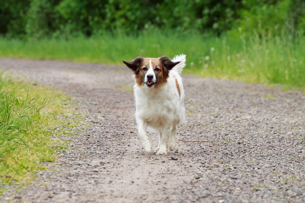 Fotoshooting Mensch und Hund IMG 5333w2