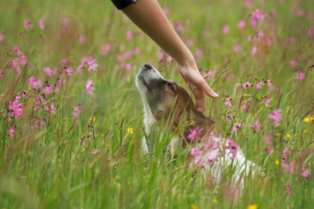 Fotoshooting Mensch und Hund IMG 5359w2