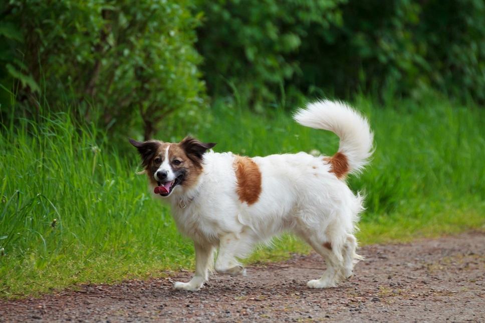 Fotoshooting Mensch und Hund IMG 5387w2