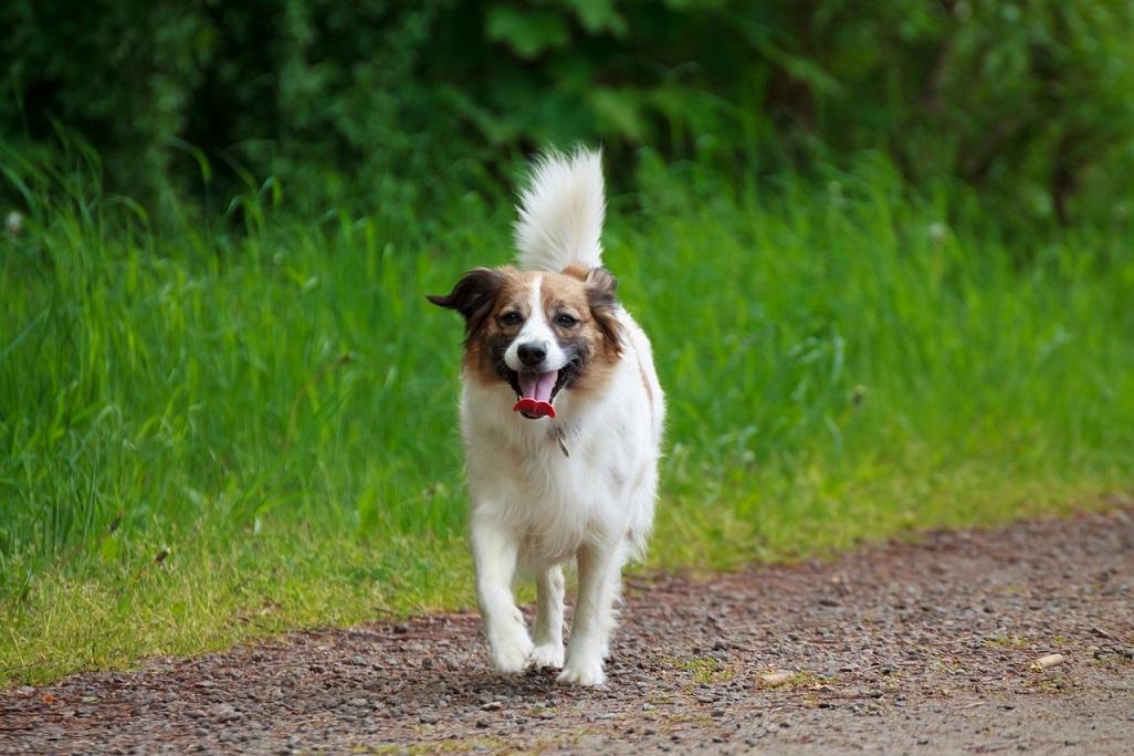 Fotoshooting Mensch und Hund IMG 5388w2