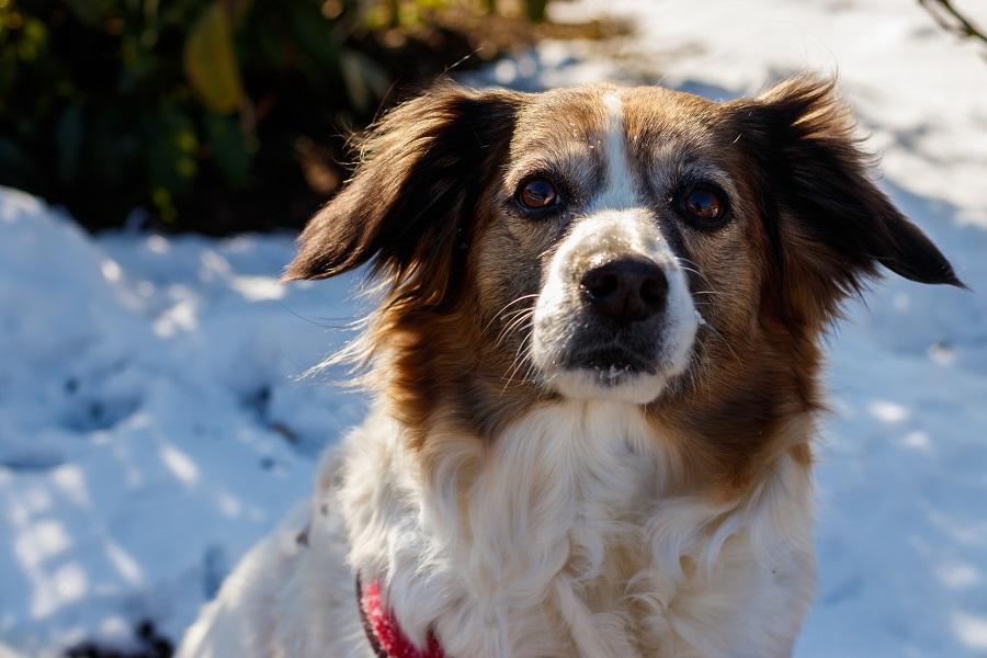 Hundefotografie im Schnee IMG 7715w
