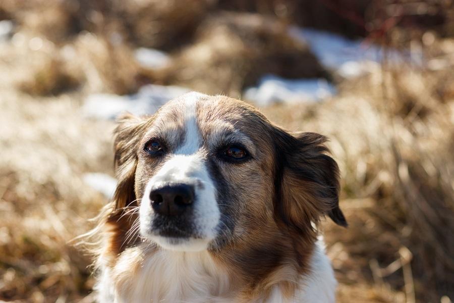 Hundefotografie im Schnee IMG 7720w