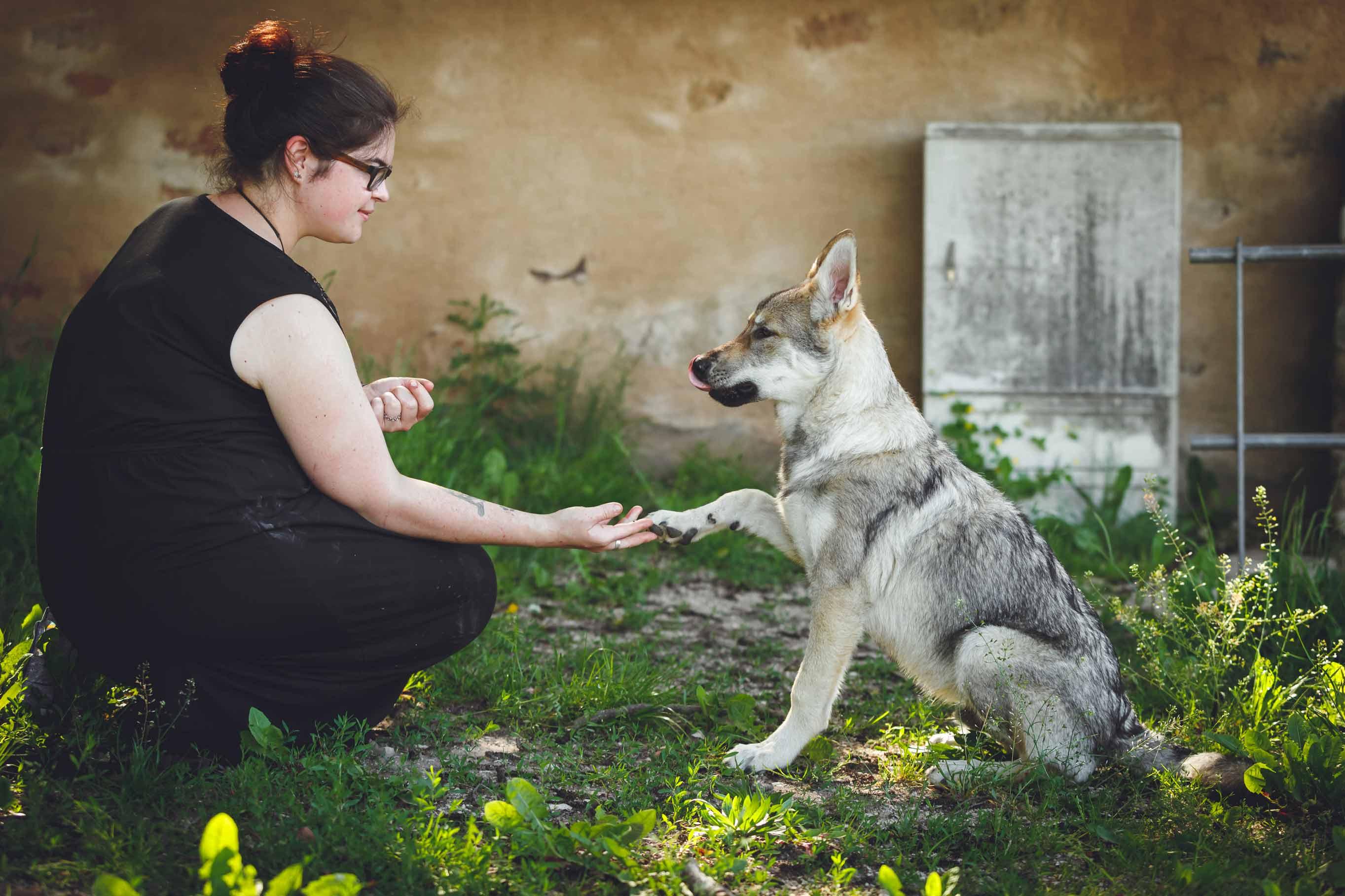 Hundefotografie mit Suko dem Tschechoslowakischen Wolfshund IMG 8491w