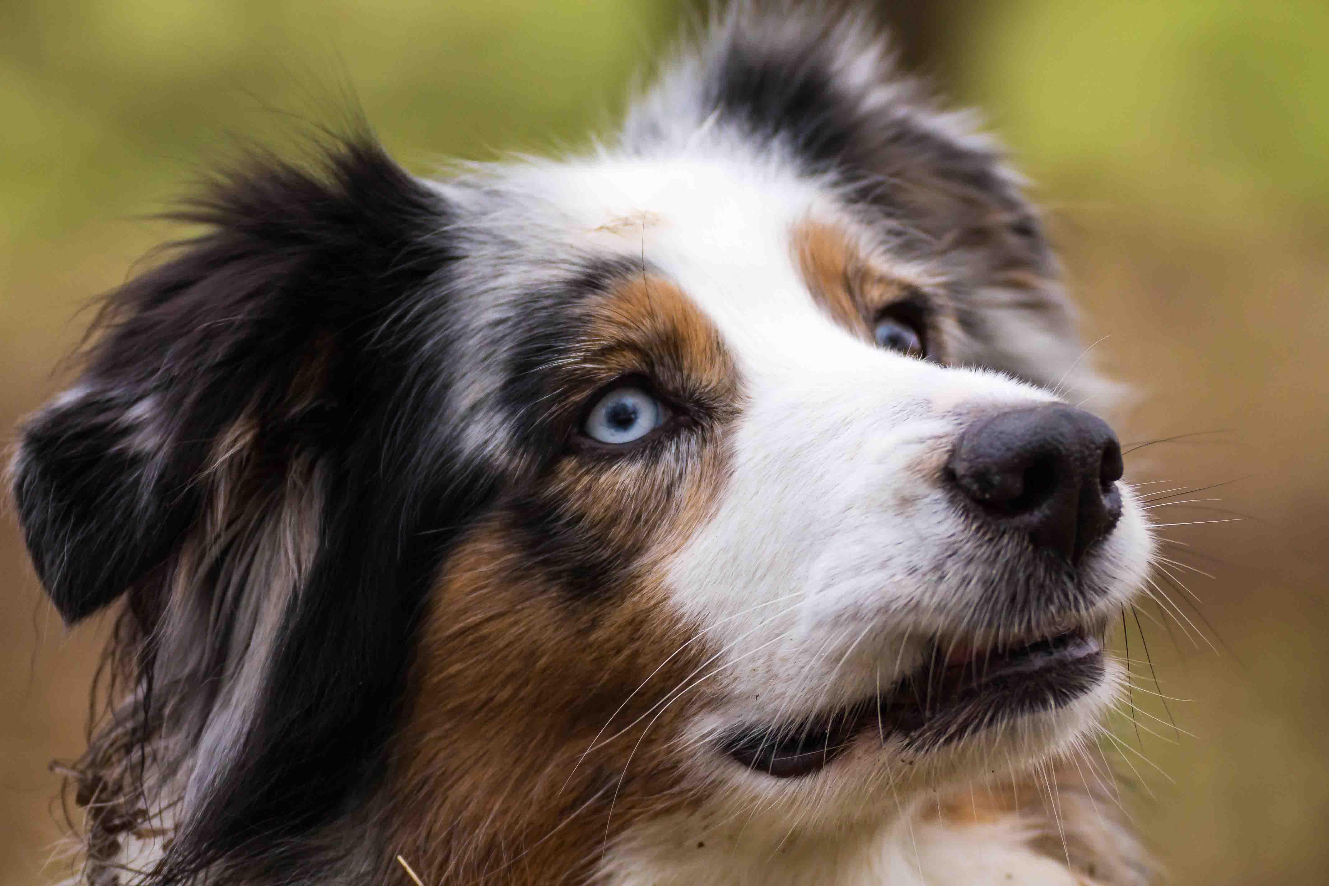 Hundefotografie-4145w