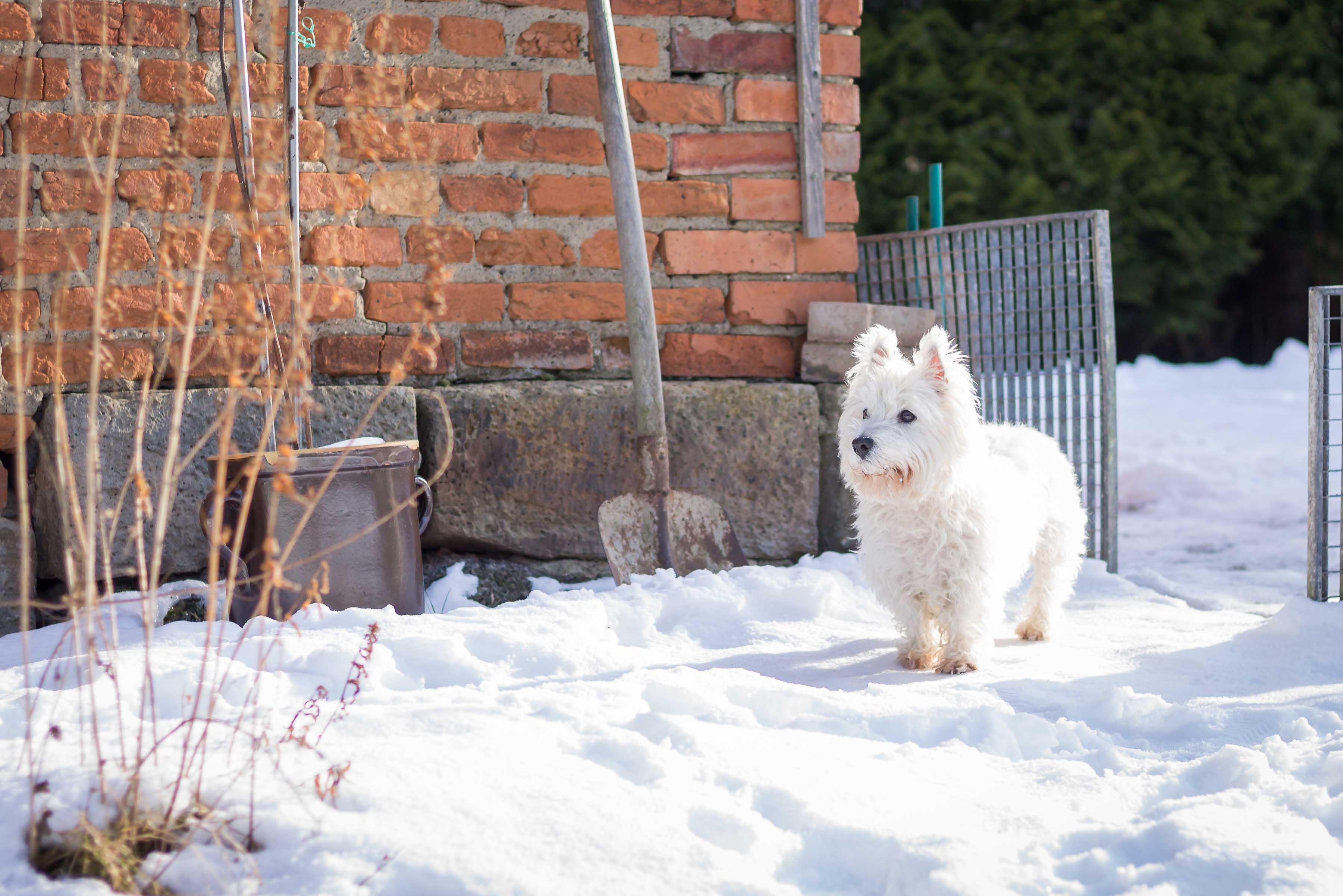 Hundefotografie-0995w