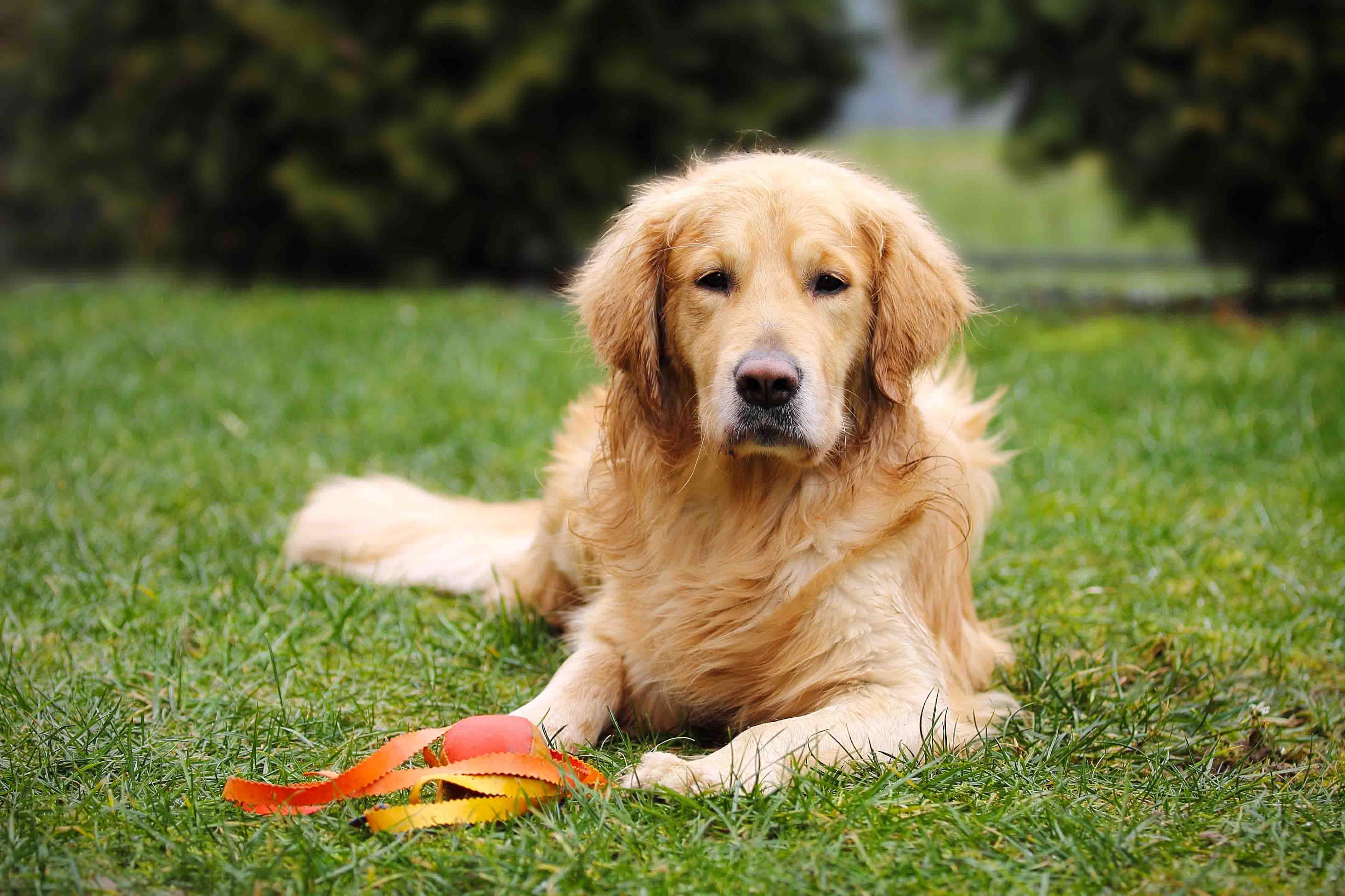 Tierfotografie und Hundefotografie IMG 4653w