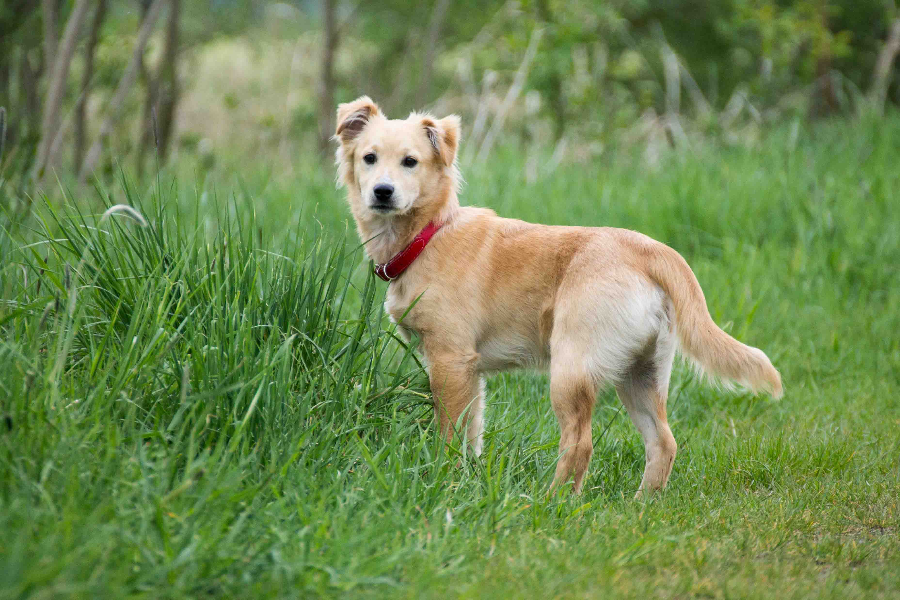 Tierfotografie und Hundefotografie IMG 5216w