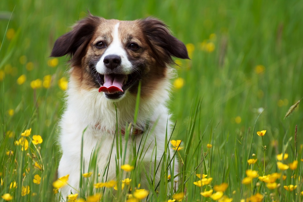 Tierfotografie und Hundefotografie IMG 5357w2