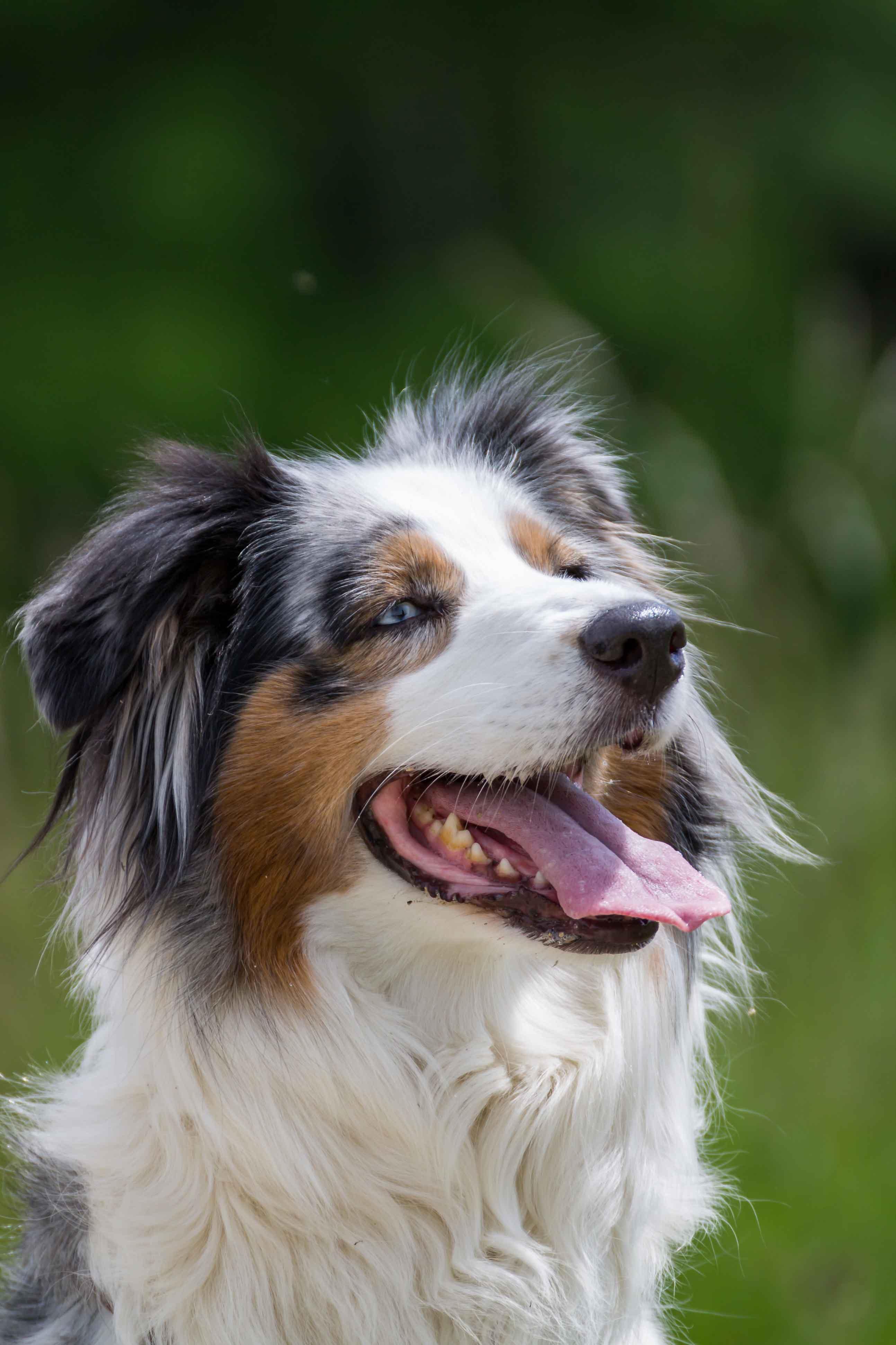 Hund, Katze, Pferd - Tierfotografie IMG 5416w
