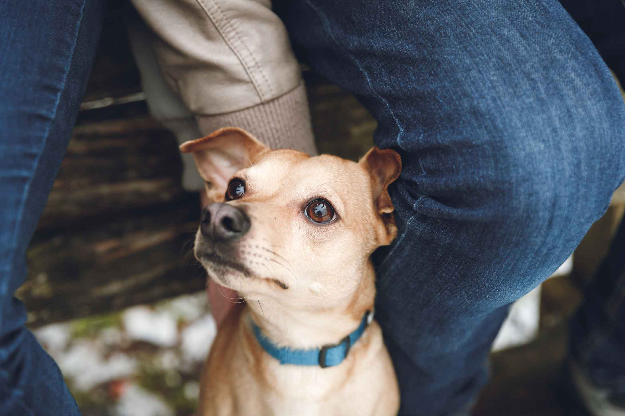 Hund, Katze, Pferd - Tierfotografie IMG 8044w