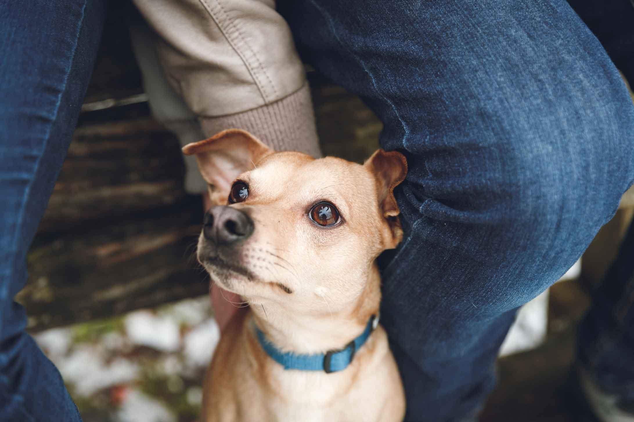 Tierfotografie und Hundefotografie IMG 8044w