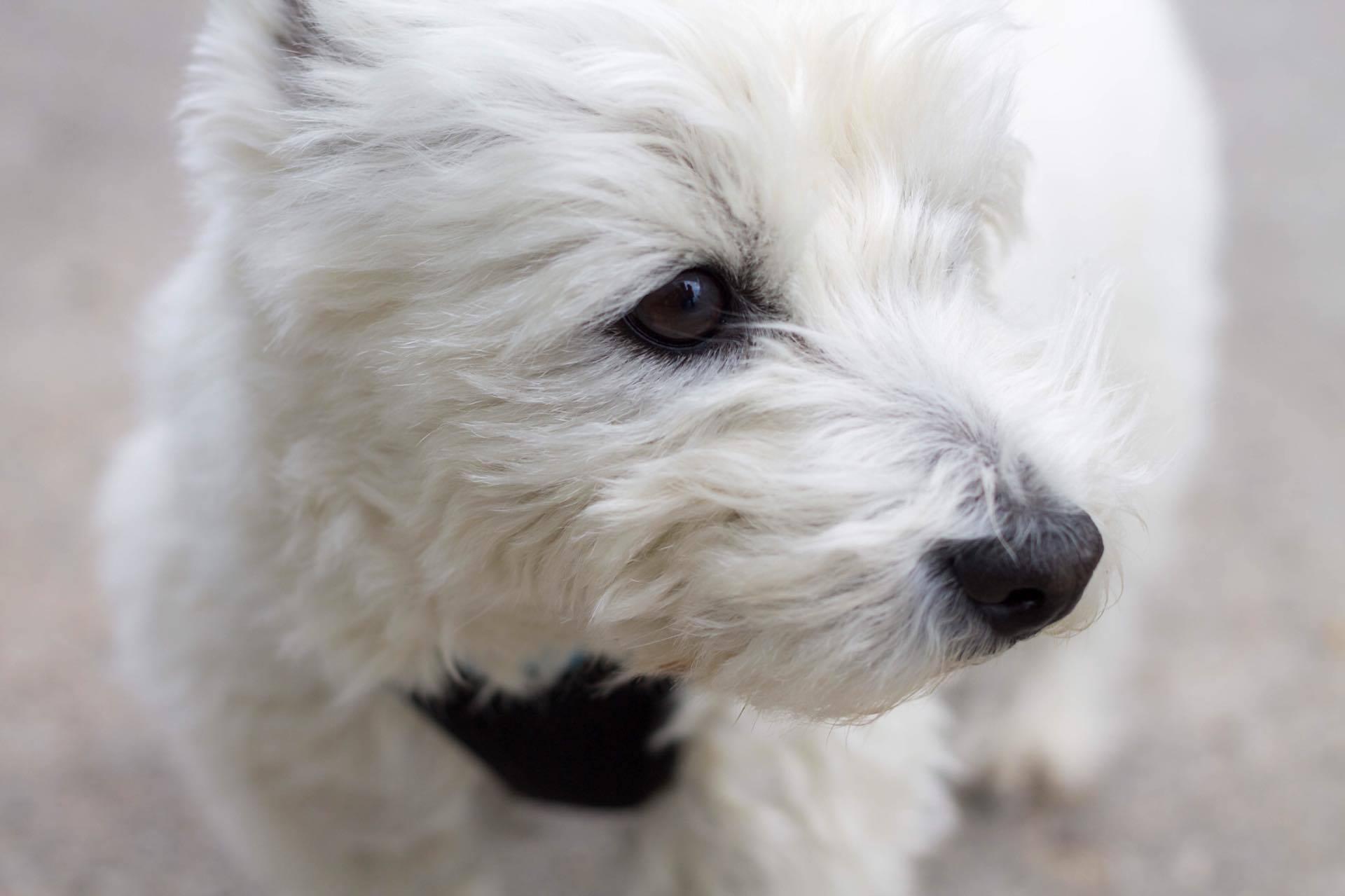 Tierfotografie und Hundefotografie Sina