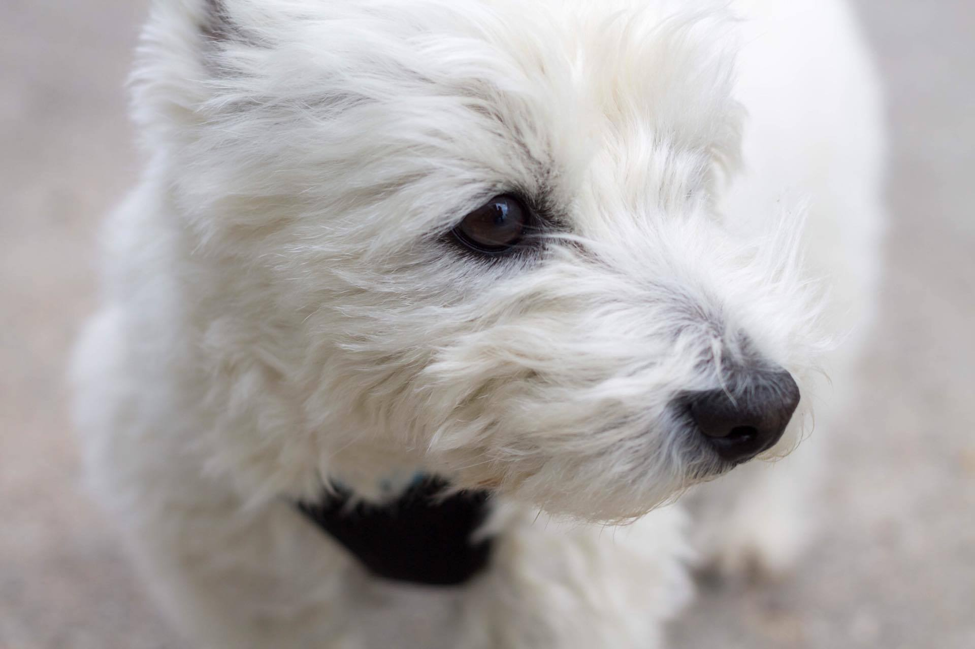 Hund, Katze, Pferd - Tierfotografie IMG Sina