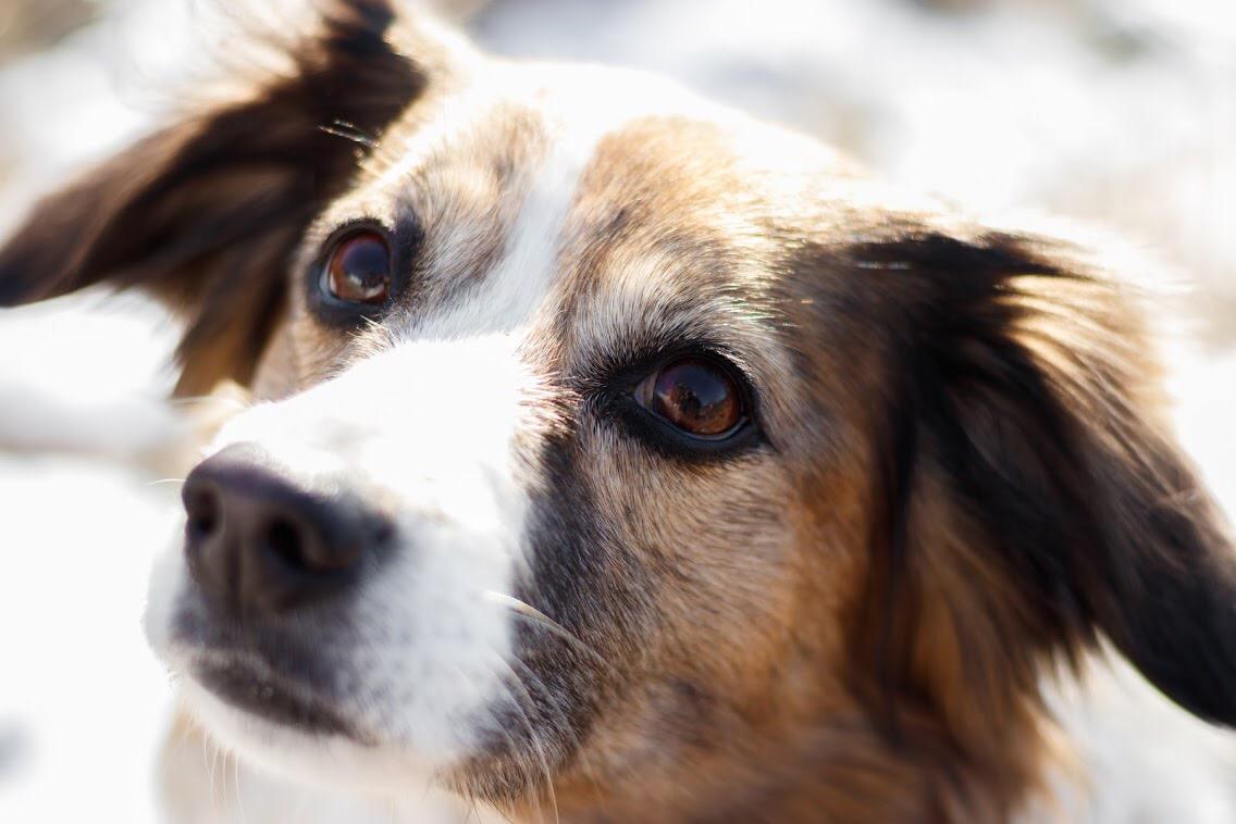 Tierfotografie und Hundefotografie image1