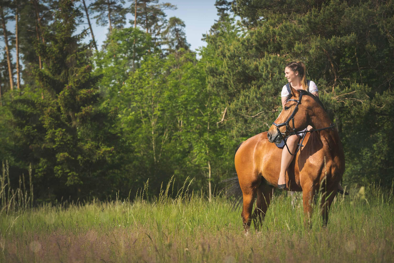 Pferdeshooting im Wald und auf der Heide IMG 1364w